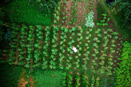 Blick aus der Vogelperspektive auf einen Mann, der auf einem Feld arbeitet.