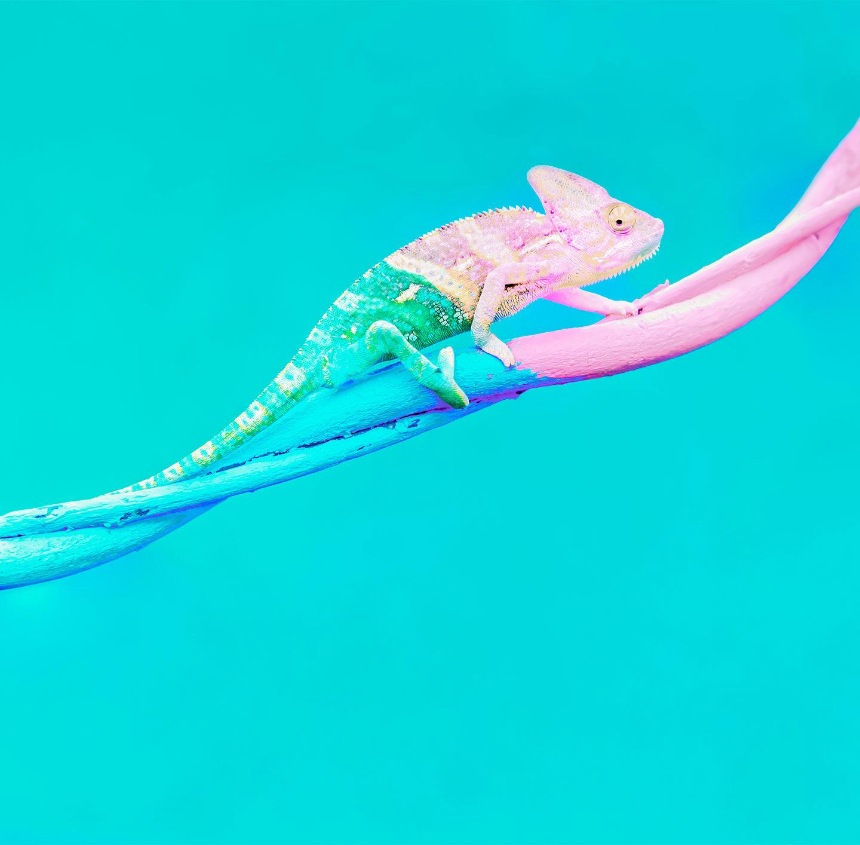 Illustration eines Chamäleons, das auf einem Ast läuft und sich verschiedenen Farbverläufen anpasst.