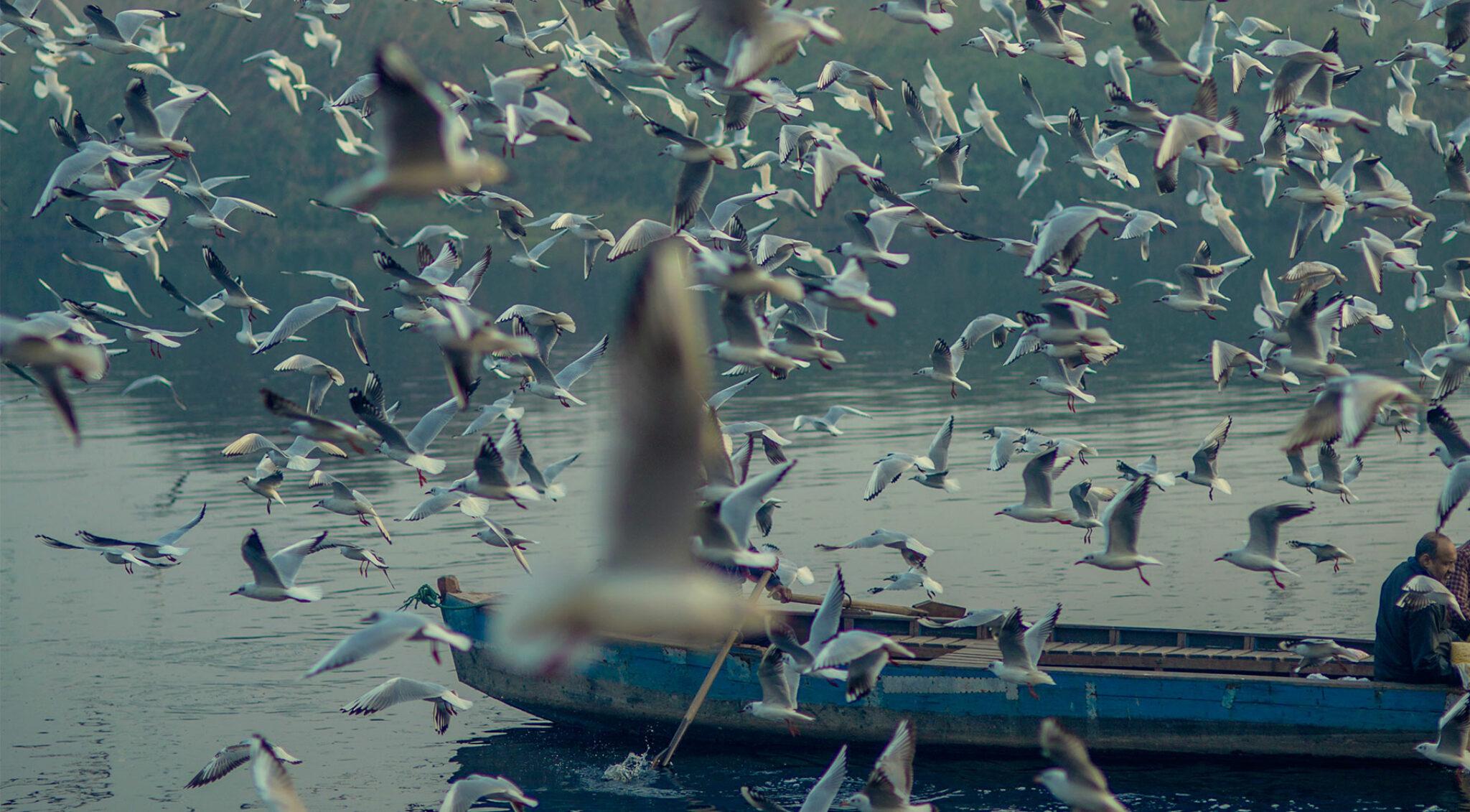 Ein Schwarm Vögel vor einem Boot.