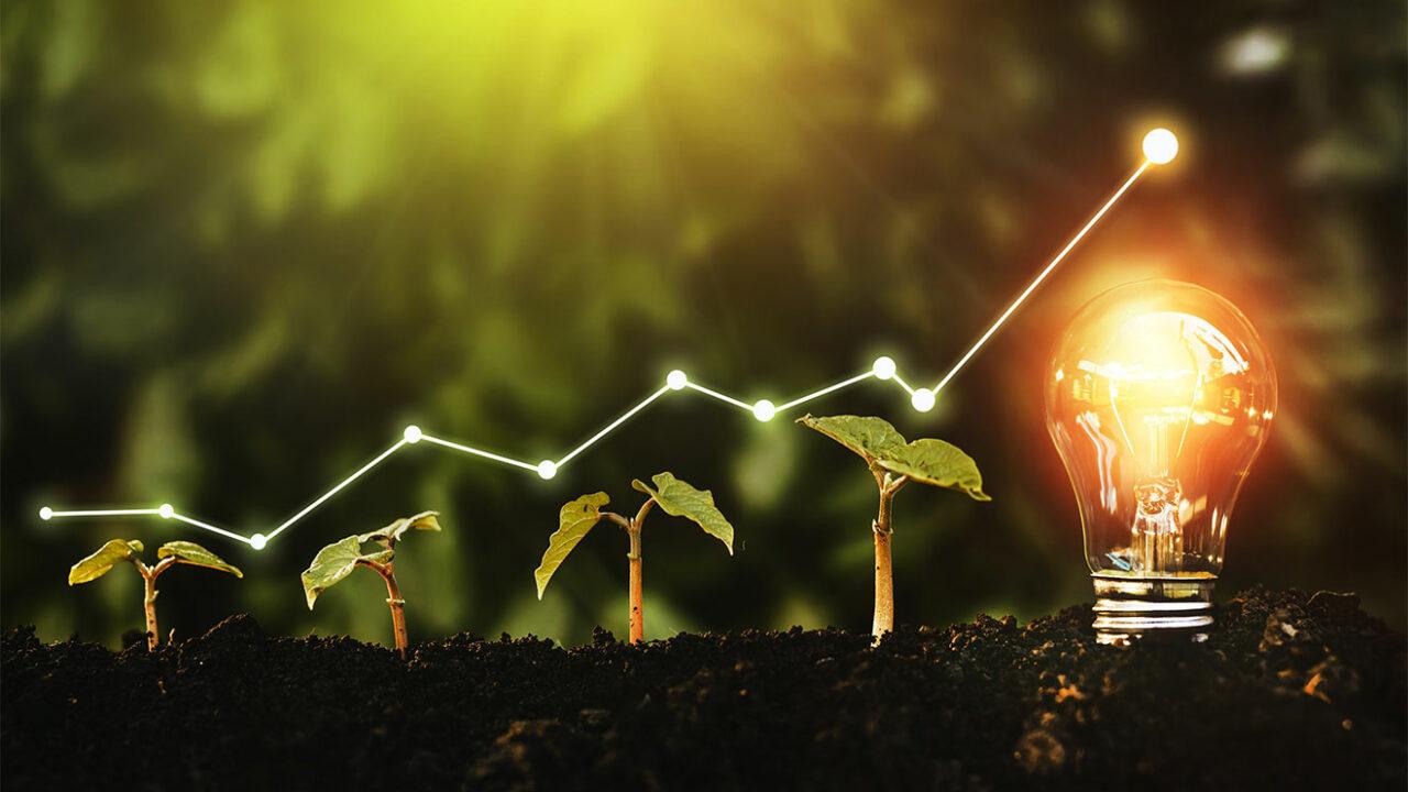 Eine leuchtende Glühbirne neben vier Pflanzensetzlingen.