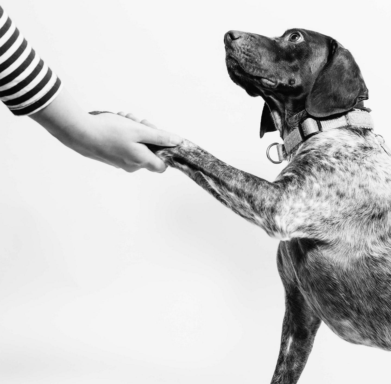 Hund gibt einer Frau die Pfote.