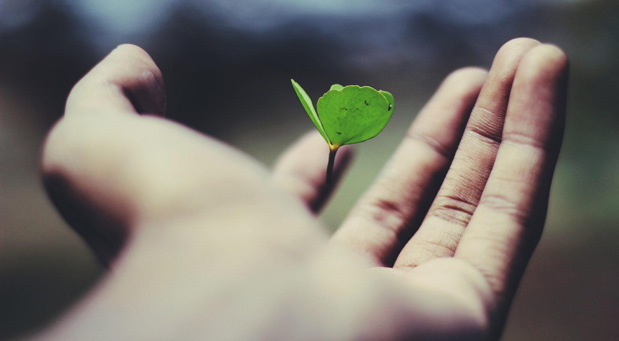 Ein Kleeblatt schwebt über einer Handfläche.