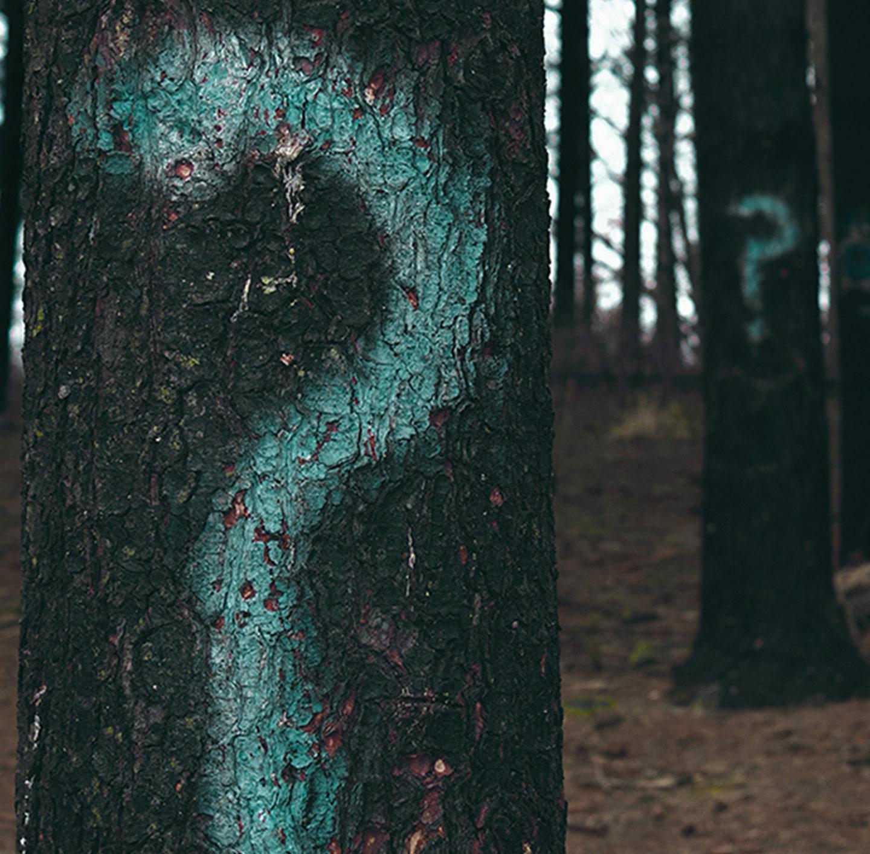 Auf Baumstämme im Wald sind große Fragezeichen gemalt.