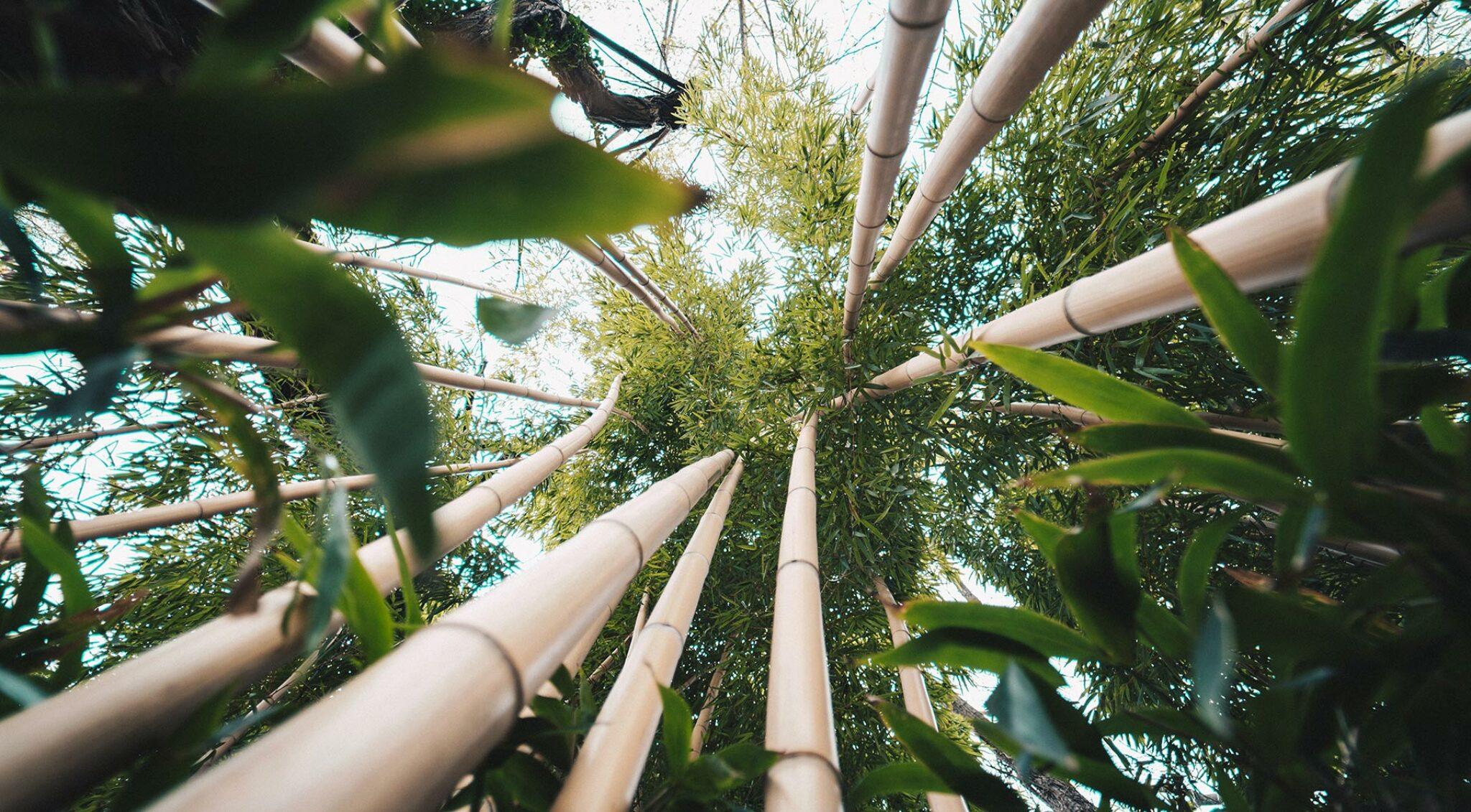 Blick von unten auf Bambusstäbe.